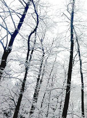 Icy Grey
